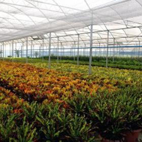 plantasMadre2.png
