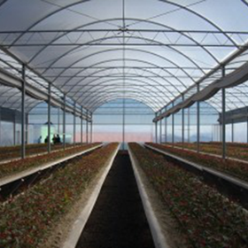plantasMadre1.png