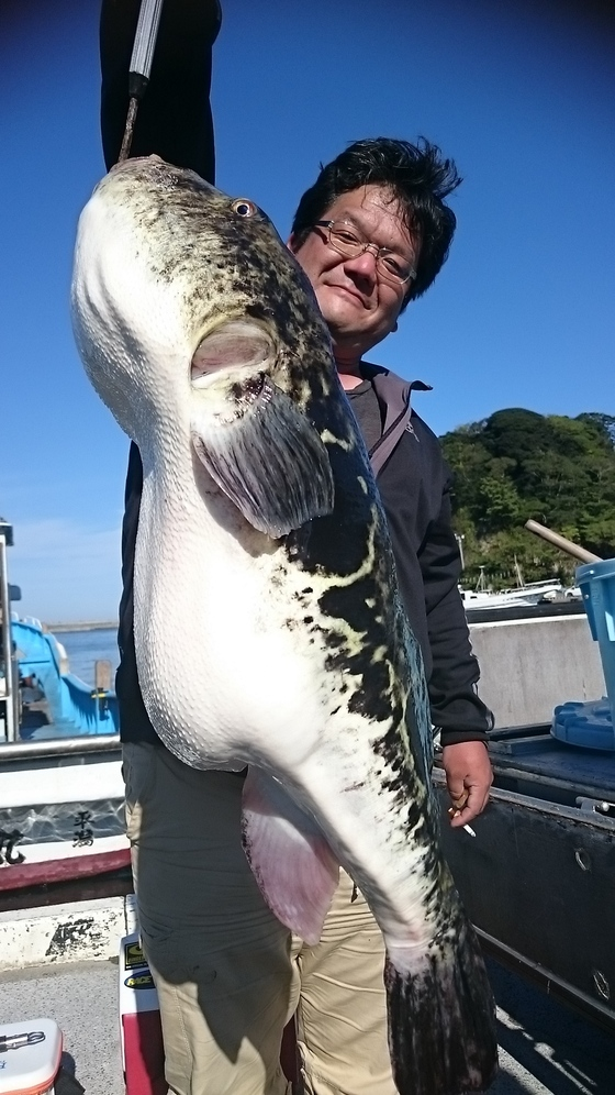 巨大トラフグ7.5kg