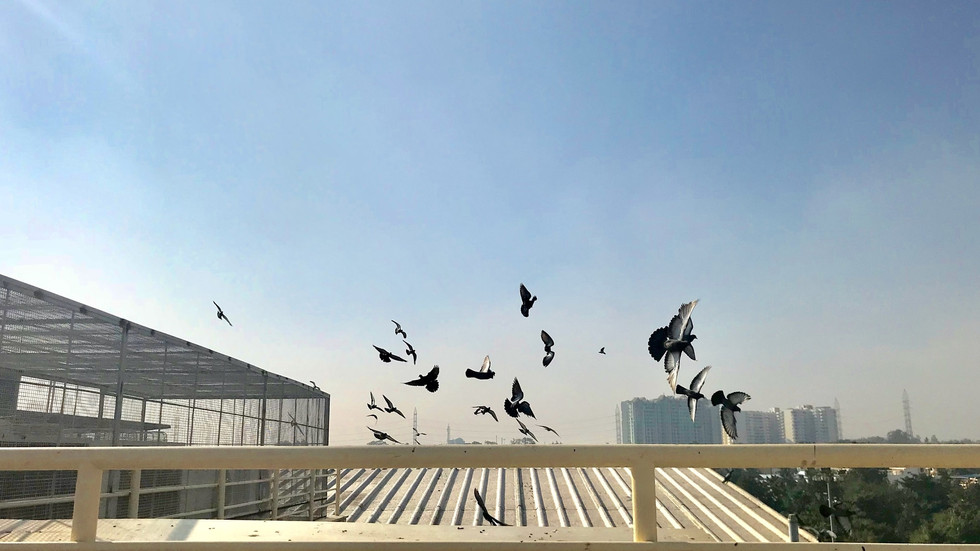 Rooftop adventures, Yelahanka, Bengaluru, India