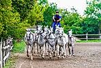 GUT-Puszta Pferde_Halbtotele-2DSC_2745.j