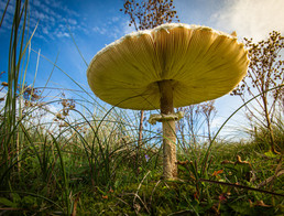 'Under a Parasol' by Terry Hanna - Commended