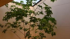 植栽と照明
