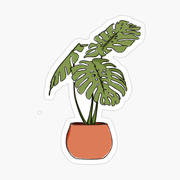 House Plant Split Leaf Philodendron illu
