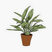 House Plant Illustration kiss cut sticke