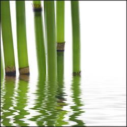 Quadros E2G Design bambu parte 2