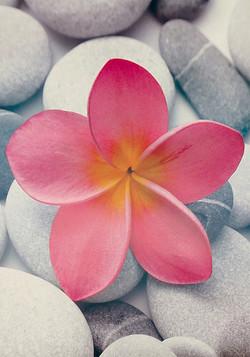 Quadros E2G Design flower