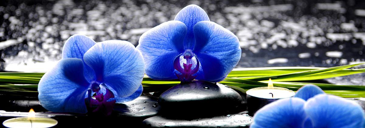 Quadros E2G Design flores