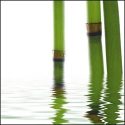 Quadros E2G Design Bambu
