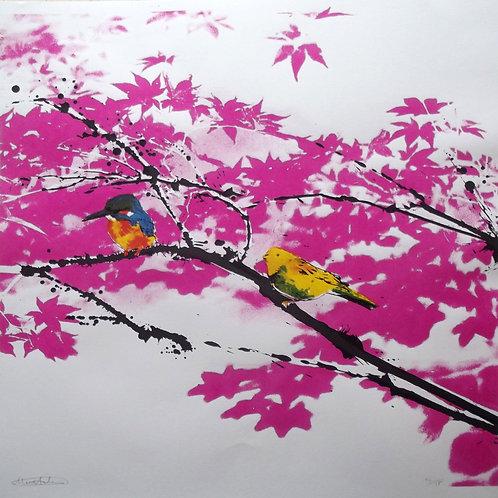 Birds Watching v3