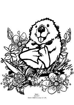 Cub_Beaver.jpg