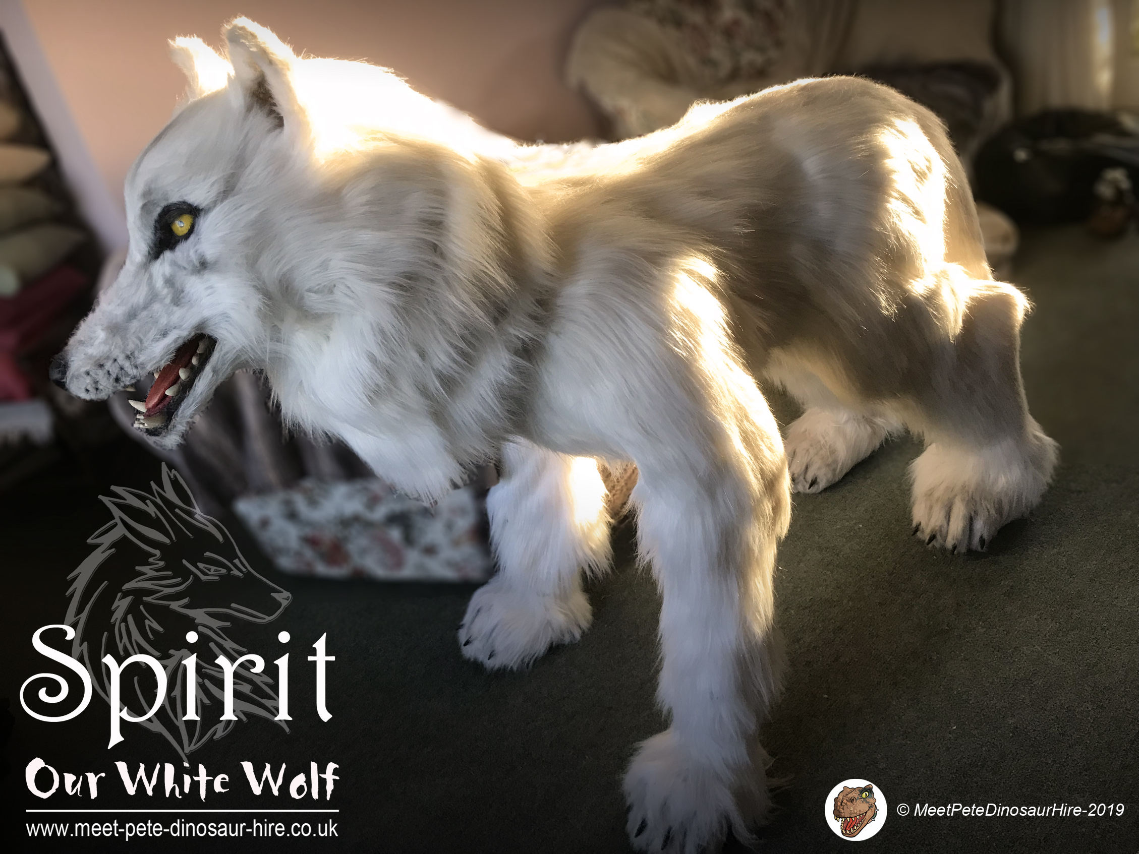 Spirit the Wolf event Hire