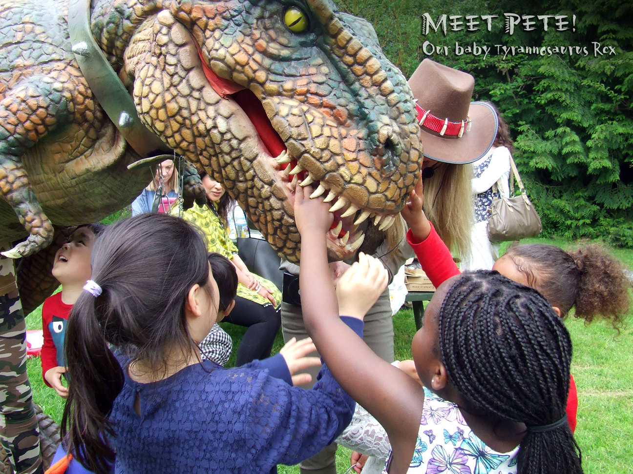 Meet Pete Animatronic Dinosaur Hire