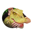 Walkabout Dinosaur Hire, Walkabout Dragon Hire, Walkabout Wolf Hire, Hire a Dinosaur, Hire a Dragon, Hire a Wolf. Animatronic dinosaur, Animatronic dragon, Animatronic wolf.Events, corporate entertainment, TV casting