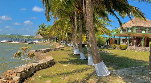palm-trees.jpg