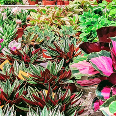 Halbrecht Farm Food Garden