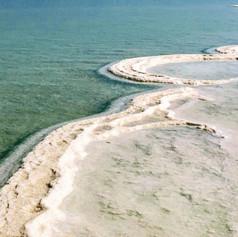 Dead Sea Mushrooms