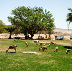 Midreshet Ben-Gurion - A Great Stop on the way to Eilat