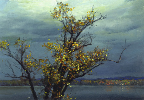 Tree Study, Susquehanna2.jpg