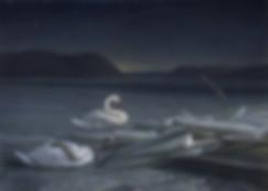 Resting Swans best for screen.jpg