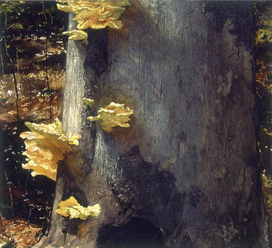Fungus_edited.jpg