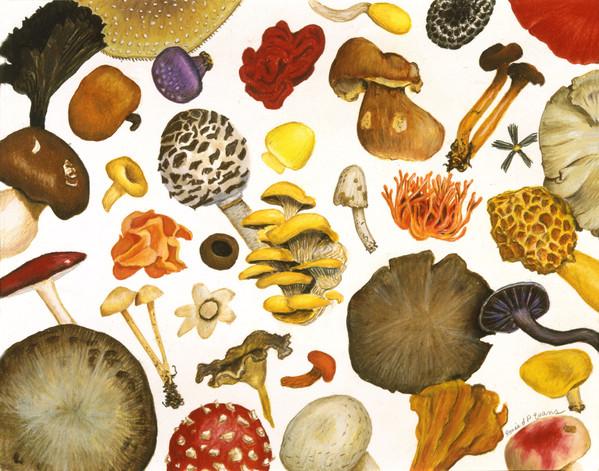 mushrooms print1.jpg
