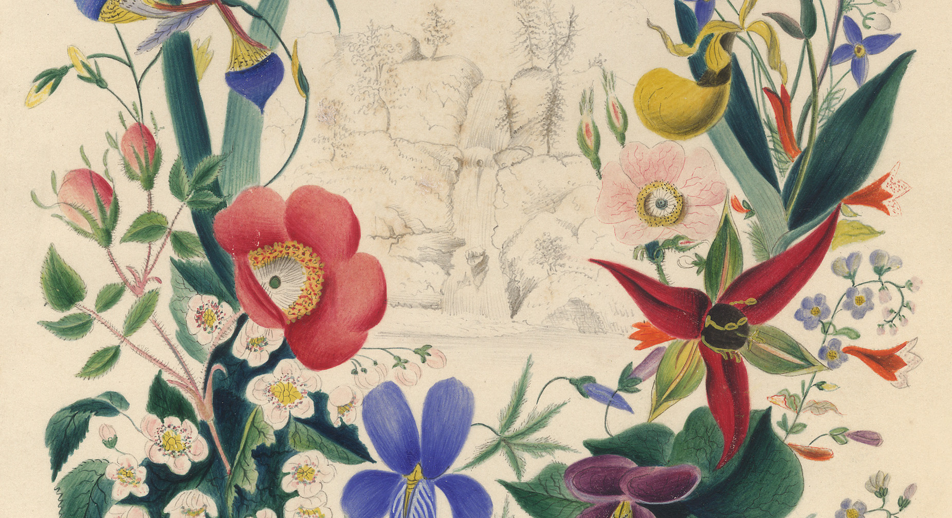 "Edwin Whitefield, ""Study for Title Page"" (of ""American Wildflowers in Their Native Haunts"" by Emma Embury)"