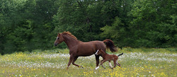 Ariane et Zoom foal 2012