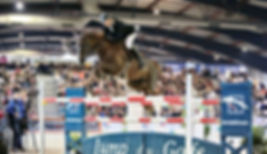 selle français SBS zangersheide chevaux à vendre cso stage pensions boxe carrière concours manège obstacle dressage élevage chevaux de sport cheval compétition virginie kasak pierre milon steven le vot charente maritime 17 royan