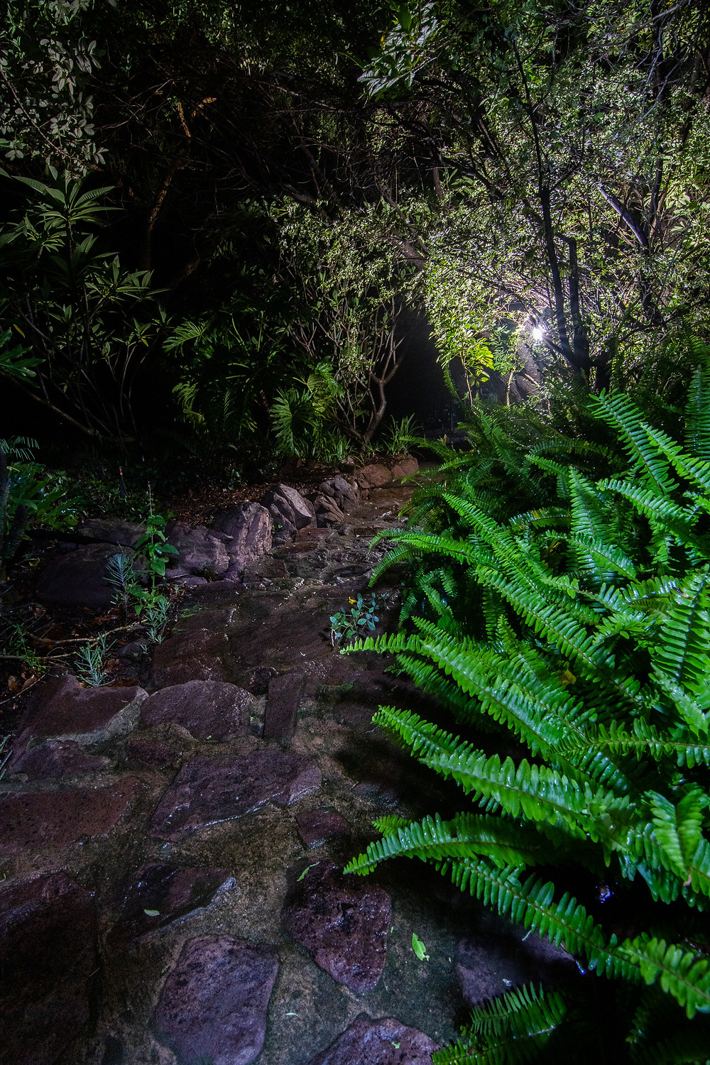 night photography south africa dinokeng