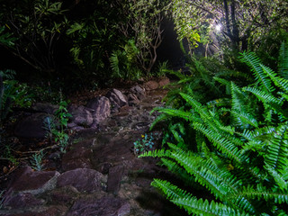 Night photography in South Africa - rain, trees, lights and bugs