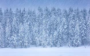 Glitch Of Winter