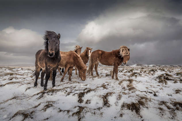 Poney Team