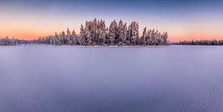 Winter Cherwood
