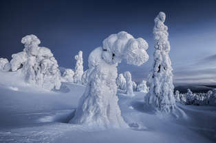 Casper Trees