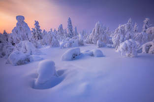 The Colorful Winter