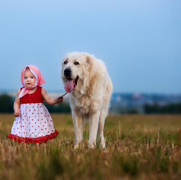 Babies & Pets