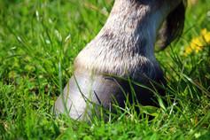 Rehabilitering av forfangen hest