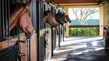 Smittebeskyttelse på hesteeiendommer