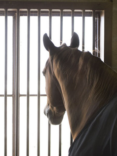 Bokshvile - hvordan gjøre den best mulig for hesten?