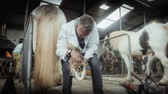 Skoing av hest: helse, prestasjon og teamwork