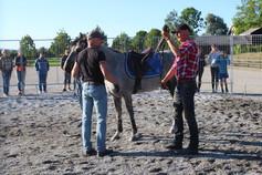 Longering av hesten; hvorfor er det viktig?