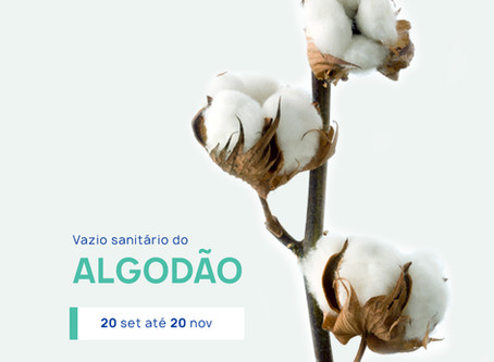 Vazio Sanitário do Algodão. De 20 de setembro a 20 de novembro.