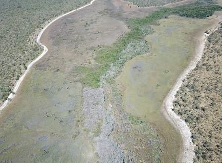 Veredas e sua importância no sistema de drenagem hidrográfica