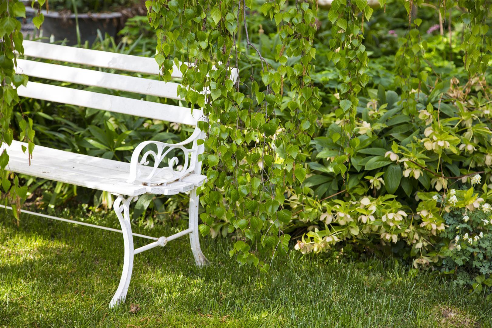 Chair in garden (Large)