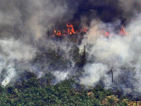 Negligência ambiental: entenda melhor a questão da Amazônia