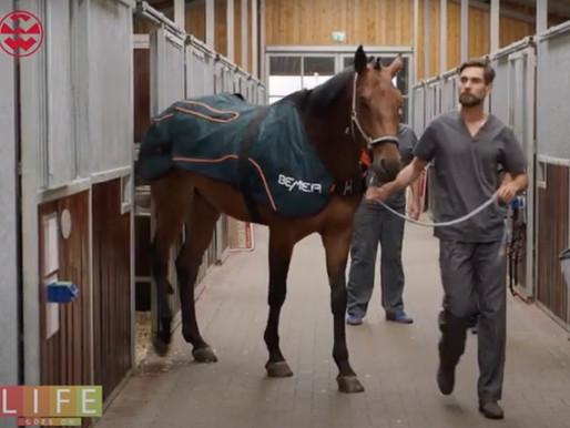 BEMER Horse-Set jest dostępny w telewizji.