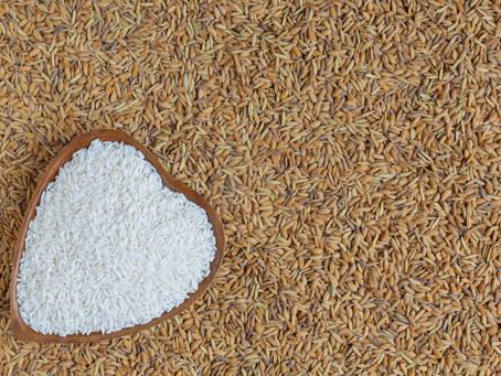 Vietnam White Rice | Vietnam White Rice Price