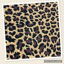 Leopard on Tan