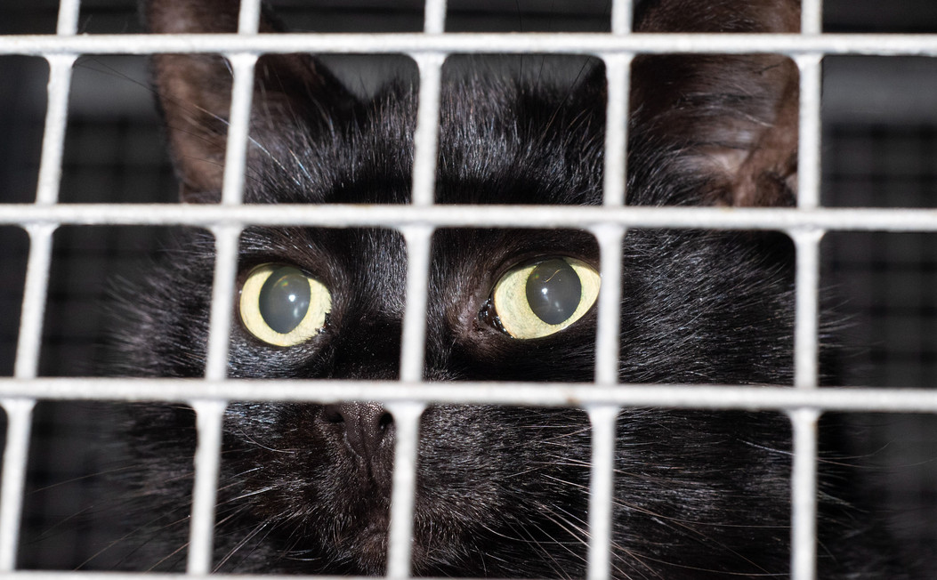 A caged animal
